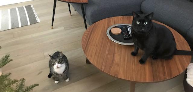 #MeetWilden – Cool Cat Duo Kato & Frank