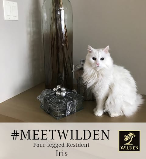 MeetWilden Cat Iris image